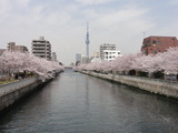 桜タワー5