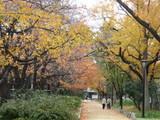 錦糸公園紅葉