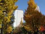 錦糸公園秋