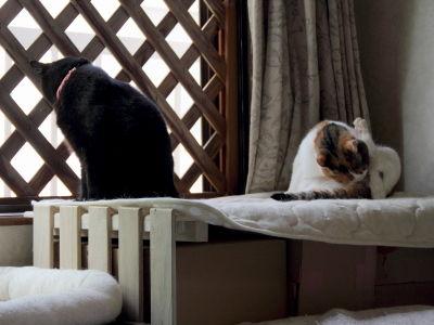 8月:DIYした「出窓風 すのこ棚」