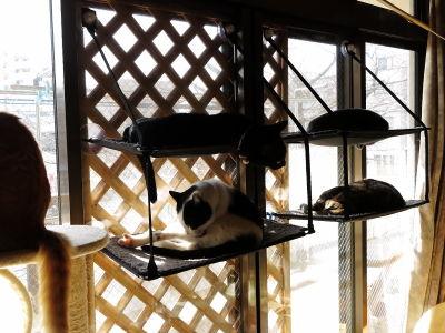 3窓辺ッド