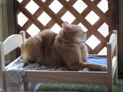3月:IKEA 猫ベッド♪