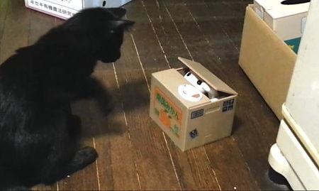 黒猫2号(薄)