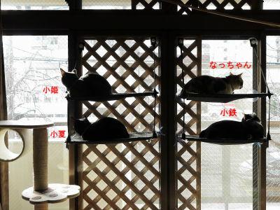 2月:ファミリーで「窓辺ッド」を占拠
