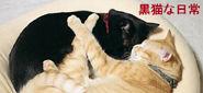 毎週日曜&水曜更新♪「黒猫な日常_クロ&コルネ」