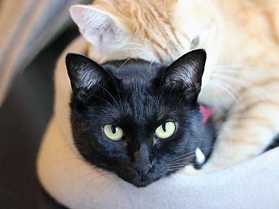 猫ブログ_クロさん