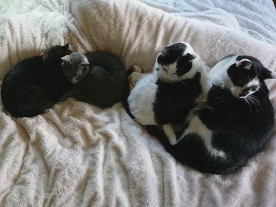 5月_人間用ベッドで、4にゃん猫団子