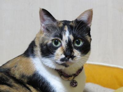猫ブログ_なつ