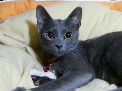 猫ブログ_小姫