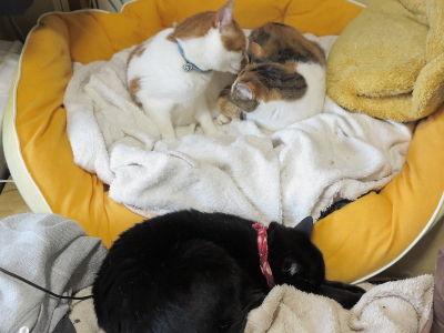 6月_特大猫ベッド