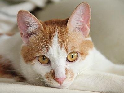猫ブログ_あっくん