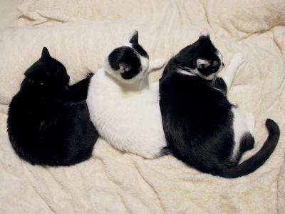 2(猫)団子3きょうだい♪