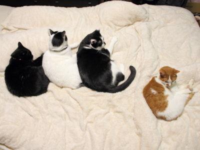7月 猫用和布団に興味シンシン