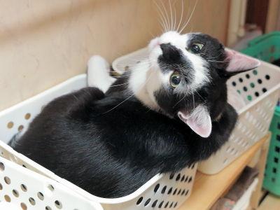 猫ブログ_小鉄&小夏