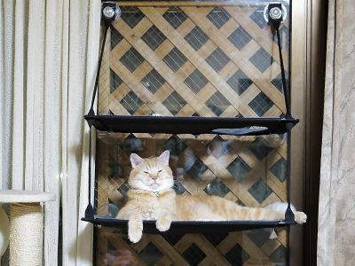 12月:みんにゃに大人気の「窓辺ッド」♪
