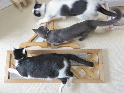 4コルッチ&ハル、小鉄&ヒメちゃん