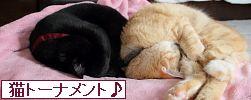 にほんブログ村 猫ブログトーナメント♪へ