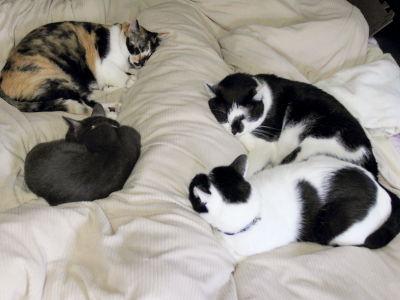 10月:人間用ベッドで猫団子