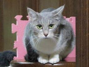 猫ブログ_NANA
