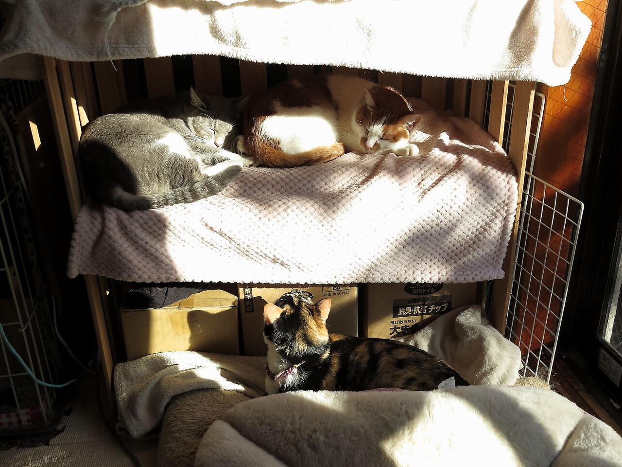 2月:小鉄とお昼寝