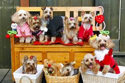 チェリィ&ベリィ犬舎