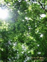 葉の間から木漏れ日