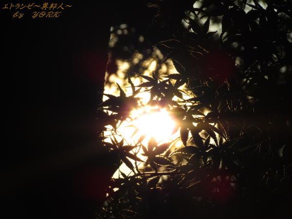 0406紅葉の葉から太陽111009