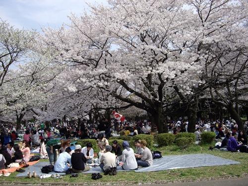 代々木公園お花見風景