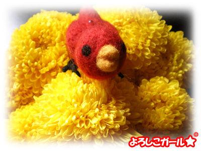 あずきちゃんの羊毛ぬいぐるみと菊の花