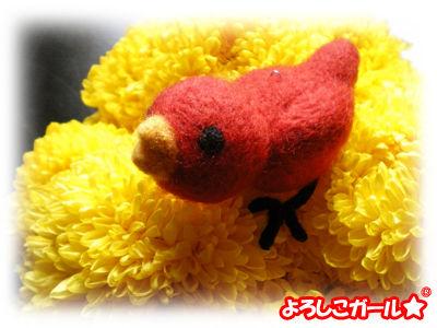 あずきちゃんの羊毛ぬいぐるみと菊の花2