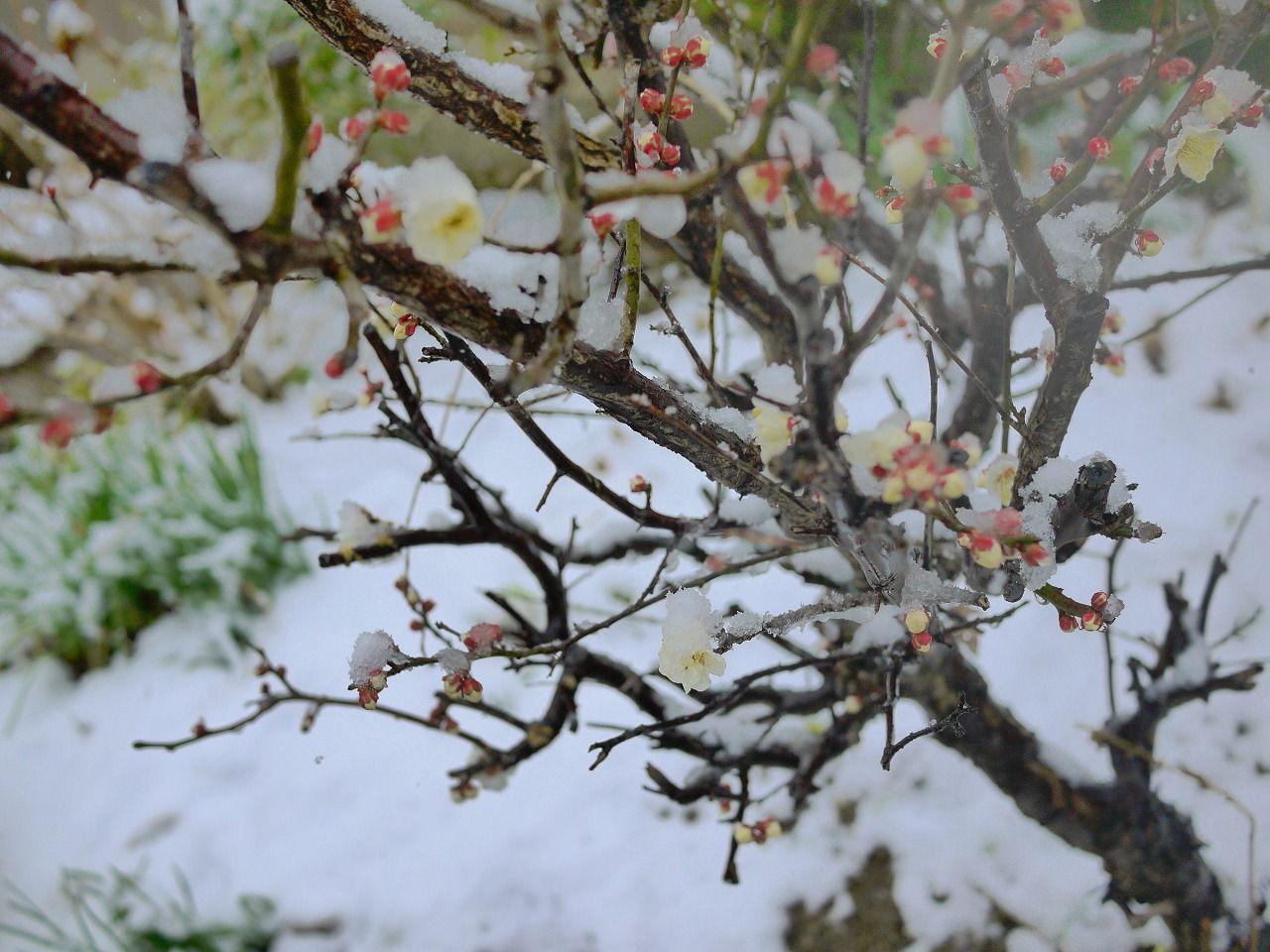 11日も大雪?の画像