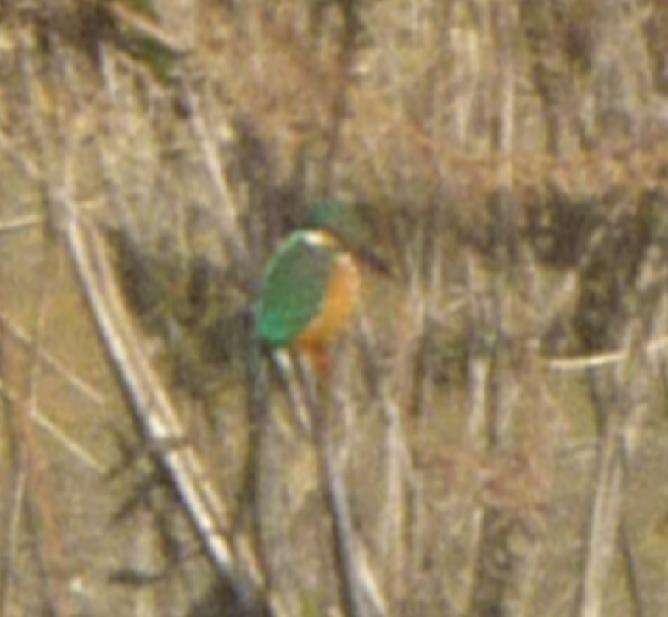 行ってきました「冬鳥を見に行こう!」4km弱 7000歩の画像