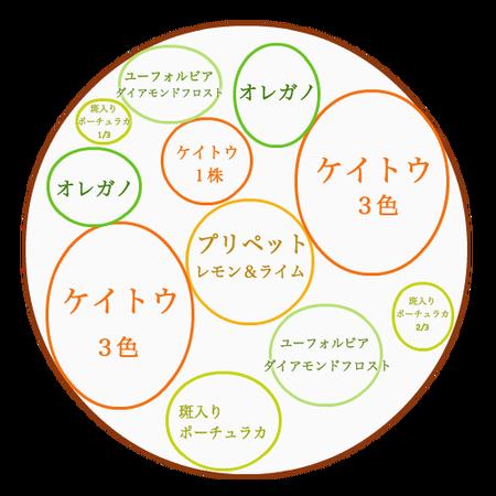 ケイトウの寄せ植えの配置図