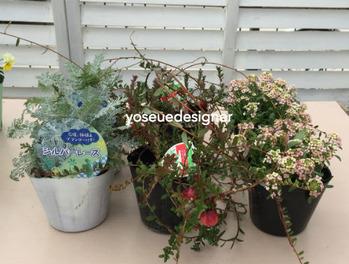 花材:アリッサム、クランベリー、シルバーレース