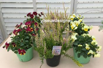 花材:ビオラ2色、カルーナ