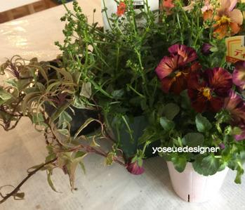 花材:ビオラ