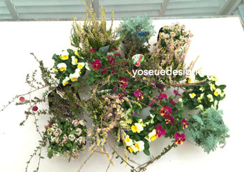 花材:クランベリー、ビオラ、カルーナ、アリッサムなど