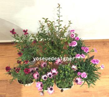 寄せ植えの花材