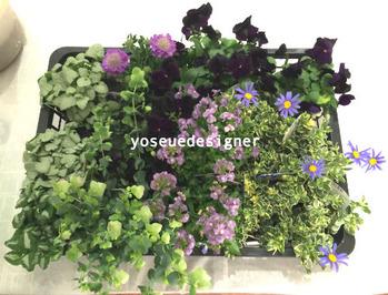 花材:ブルーデージー、ビオラ、スカビオサ、オレガノなど