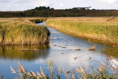 wetlands-384010_1280