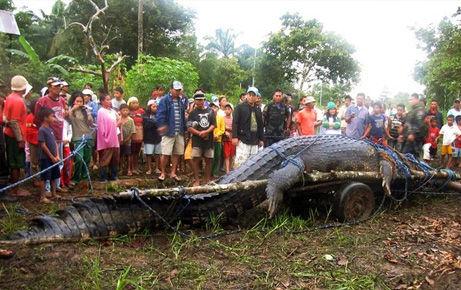 giant-saltwater-crocodile-found-philippines-cart_39952_big