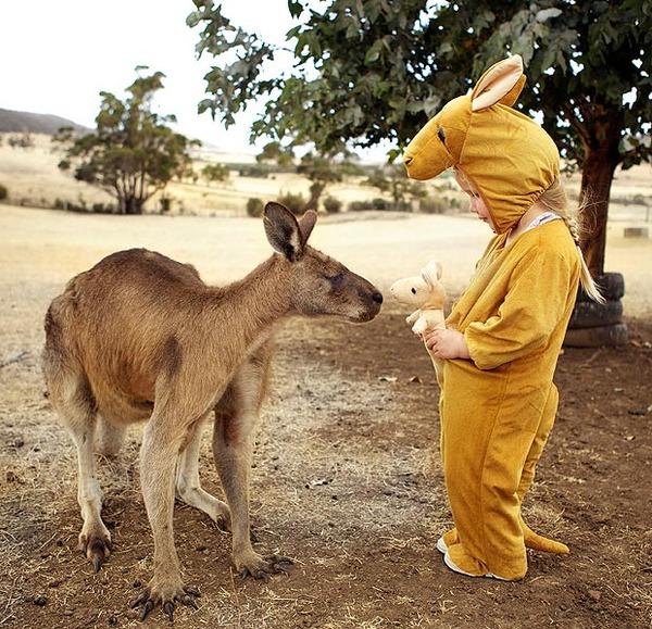 curios-kangaroo-ma_1729404a