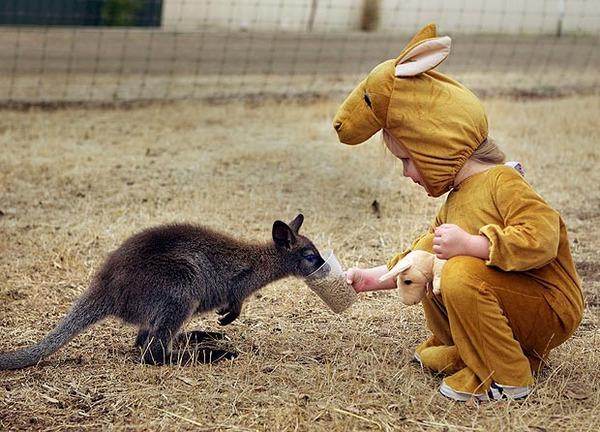 curios-kangaroo-62_1729403a
