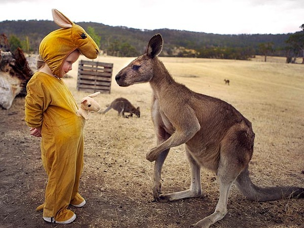 curios-kangaroo-62_1729401a