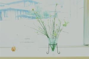 オリヅルラン花瓶1