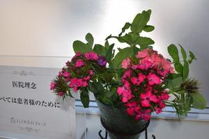よしどめ歯科のお花〜吉田の郷さんからの頂き物1