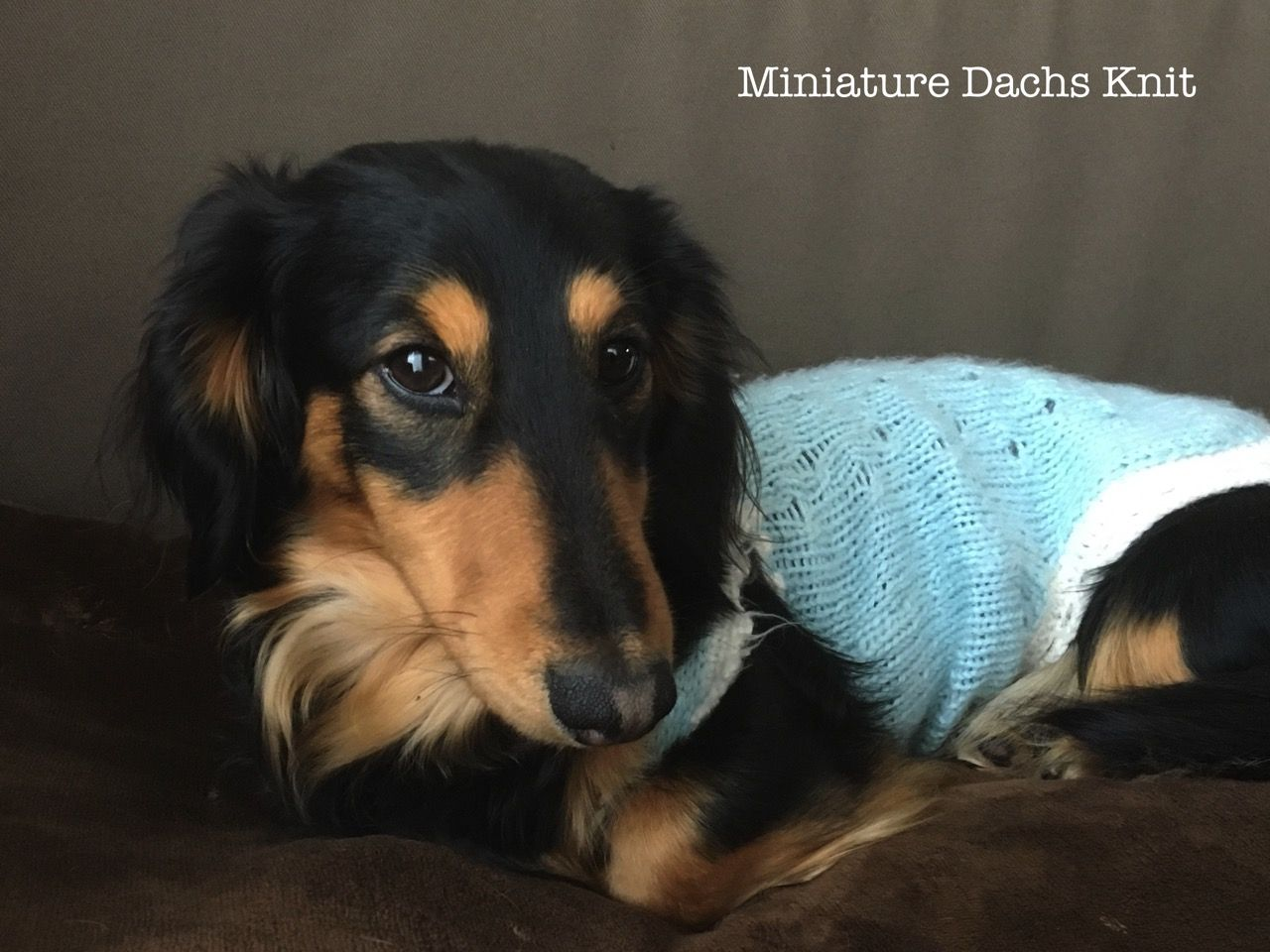 Miniature Dachs Knit