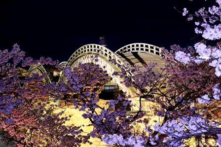 錦帯橋の夜桜2