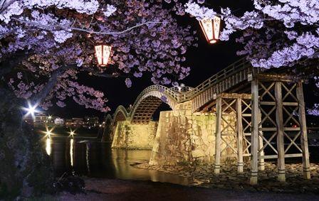 錦帯橋の夜桜1