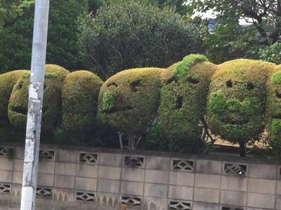 顔の植木3